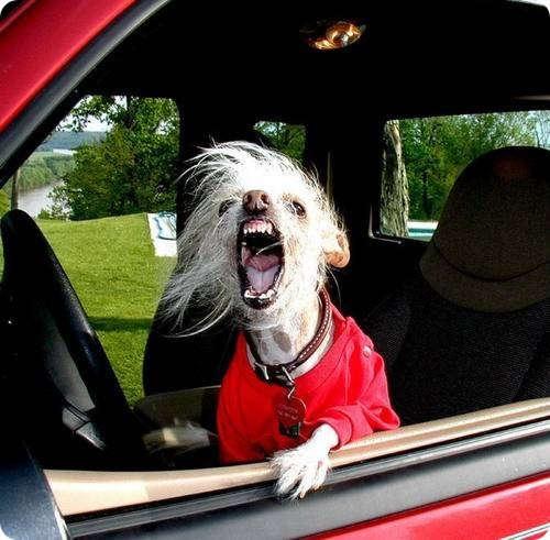 Отвали от моей машины!