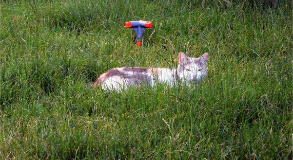кошка на газоне