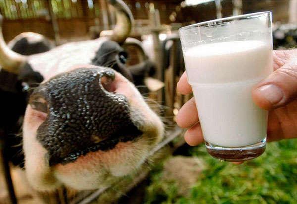Молоко от коровки