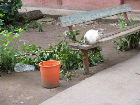 Кошка у подъезда. Балаково