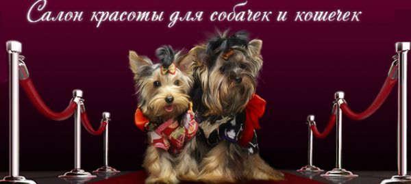 dogroom